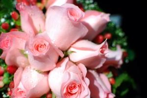 Piękne bladoróżowe róże